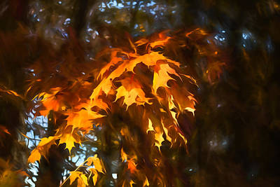 Spotlight On The Golden Maple Leaves - Fall Forest Impressions Print by Georgia Mizuleva