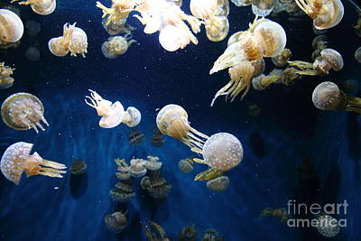 Spotted Jelly Fish 5d24952 Print by Wingsdomain Art and Photography