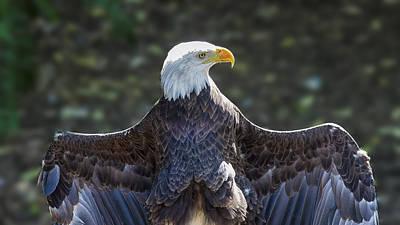 Spread Eagle Print by Bill Tiepelman