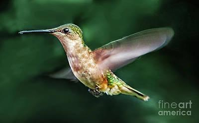Spread My Wings Original by Arnie Goldstein