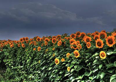 Sbatdorf Digital Art - Spreading Sunshine by Sharon Batdorf