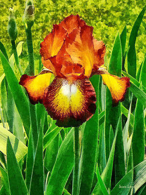 Flowers Photograph - Spreckles Iris by Susan Savad