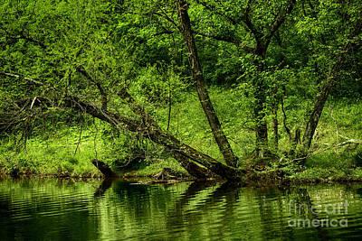 Spring Along West Fork River Print by Thomas R Fletcher