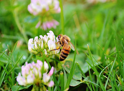 Bokeh Photograph - Spring Bee by Shelby  Young