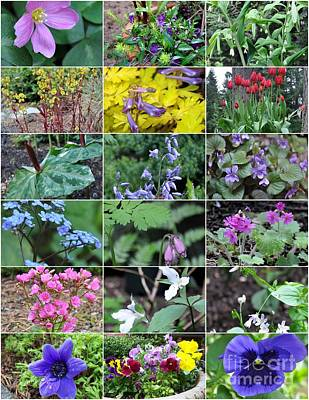 Northwest Photograph - Spring Blooms In The Pacific Northwest Garden Zone 7b by Tanya  Searcy