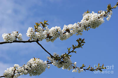 Spring Blossoms 6 Print by Carol Lynch