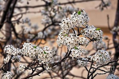 Spring Blossoms On Peach Bokeh By Kaye Menner Original by Kaye Menner