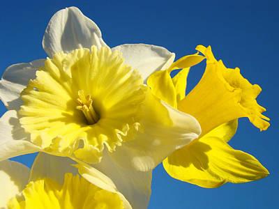 Spring Blue Sky Art Prints Daffodil Flowers Print by Baslee Troutman