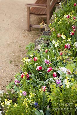 Dutch Hyacinth Photograph - Spring Border by Anne Gilbert