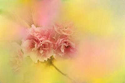 Spring Cherry Blossoms Print by Jai Johnson