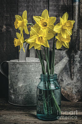 Mason Jars Photograph - Spring Daffodil Flowers by Edward Fielding