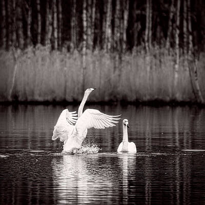 Lake Photograph - Spring Dance by Ari Salmela