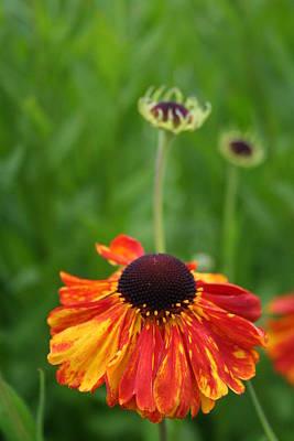 Photograph - Spring Flower by Angela Hansen