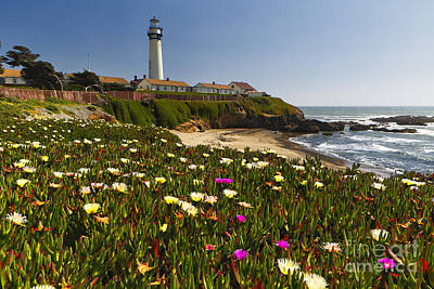 Spring Flowers At Pigeon Point Print by George Oze