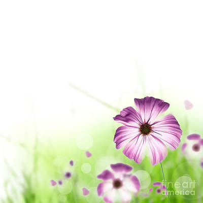 Spring Flowers Print by Boon Mee