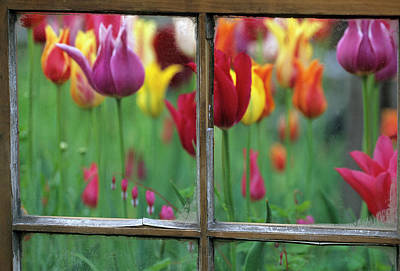 Color Transparency Photograph - Spring Garden Behind Old Window by Jaynes Gallery