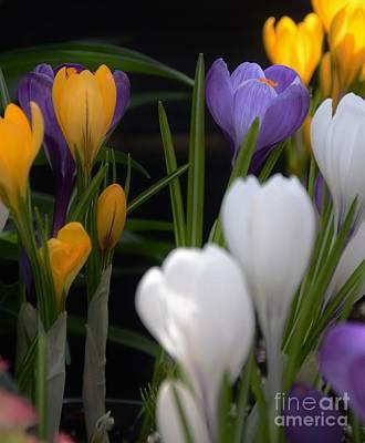 Spring Glow Print by Kathleen Struckle