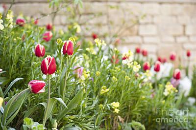 Spring Has Sprung Print by Anne Gilbert