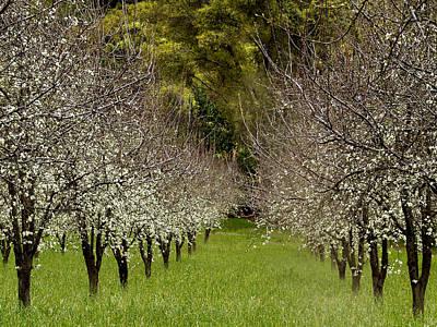 Spring Has Sprung Print by Bill Gallagher