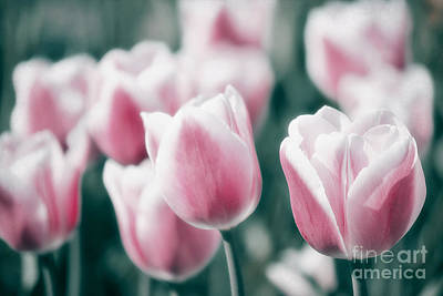 Tulips Mixed Media - Spring In Love by Angela Doelling AD DESIGN Photo and PhotoArt