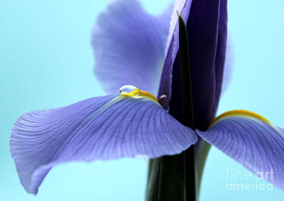 Irises Photograph - Spring Is In The Air by Krissy Katsimbras