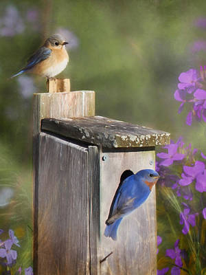 Bluebird Digital Art - Spring Is In The Air by Lori Deiter