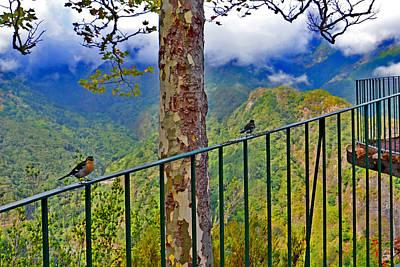 Spring Love. Madeira. Original by Andy Za