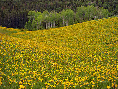 Flowers Photograph - Spring Meadow by Leland D Howard