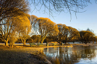 Spring Morning In The Park Print by Ismo Raisanen