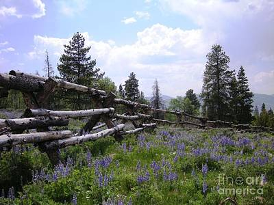 Spring Mountain Lupines 2 Print by Crystal Miller