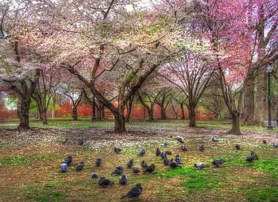 Spring Scenes Photograph - Spring On Boston Common by Joann Vitali