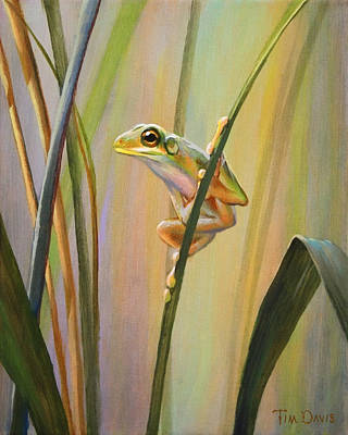 Frogs Painting - Spring Peeper by Tim Davis