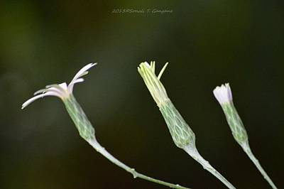 Spring Phase Print by Sonali Gangane