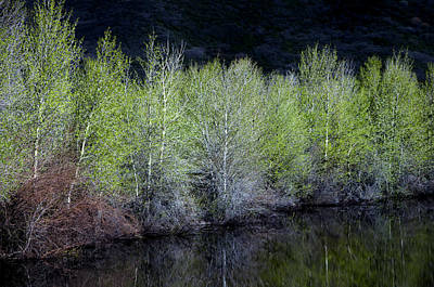 Spring Pond Print by The Forests Edge Photography - Diane Sandoval