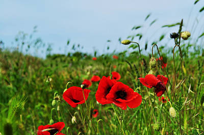 Flower Express Photograph - Spring Poppy Field by Marina Slusar