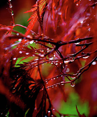 Red Leaves Photograph - Spring Rain by Rona Black