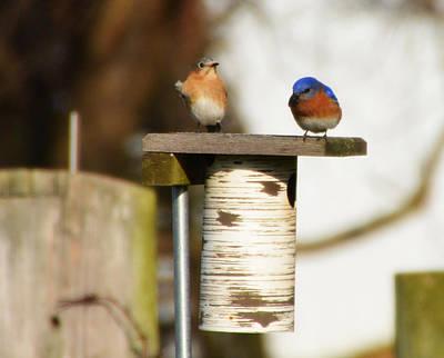 Bluejay Digital Art - Spring Songbirds by Bill Cannon