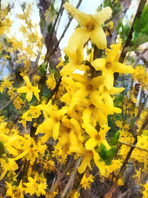 Forsythia Photograph - Spring - Sprig Of Forsythia by Susan Savad