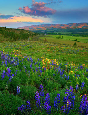Lupine Photograph - Spring Storm Passing by Mike  Dawson