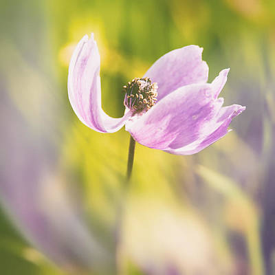 Violet Photograph - Spring by Stelios Kleanthous