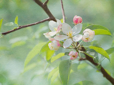 Tree Blossoms Photograph - Spring Tree Blossoms by Denise Trocio