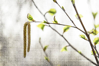 Spring Tree Branch Print by Elena Elisseeva