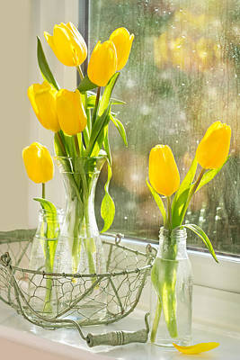 Window Sill Photograph - Spring Tulips by Amanda And Christopher Elwell