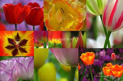 Tulpe Photograph - Spring Tulips Entertainment by Juergen Roth