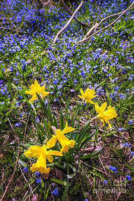 March Photograph - Spring Wildflowers by Elena Elisseeva