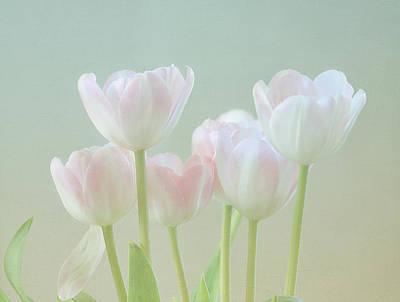Kim Photograph - Spring's Pastels by Kim Hojnacki