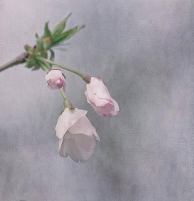 Spring's Promise Print by Kim Hojnacki