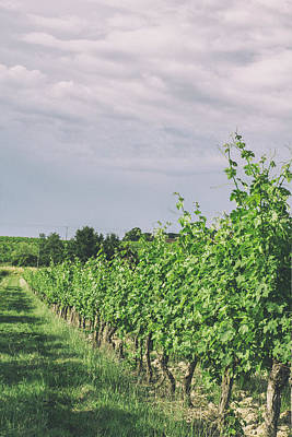 Grapevine Photograph - Springtime At The French Vineyard by Georgia Fowler