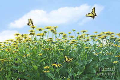 Swallowtail Photograph - Springtime by Diane Diederich