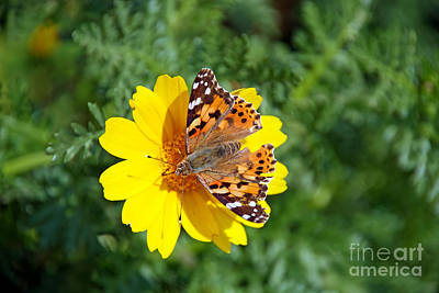 Butterfly Photograph - Springtime In Hydra Island by George Atsametakis